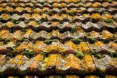 Moss Texture op oud dak royalty-vrije stock afbeeldingen