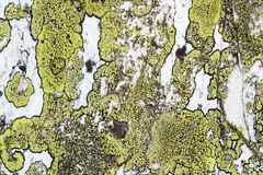 Moss texture on stone Royalty Free Stock Photos