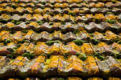 Moss Texture sul vecchio tetto immagini stock libere da diritti
