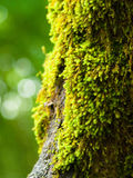 Moss on a three. In closup view Stock Images
