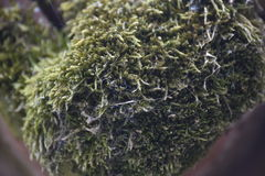 Moss. On a tile roof Royalty Free Stock Photos