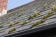 Moss Tiles Fotos de Stock Royalty Free