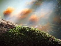 Moss on timber Royalty Free Stock Images