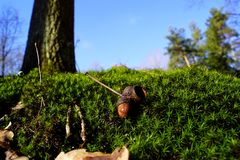 Moss, tree, acorn and blue sky, February stock photos
