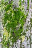 Moss Tree Bark Imágenes de archivo libres de regalías