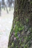 Moss on a tree. Moss on bark of a tree royalty free stock photos
