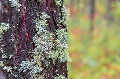 Moss on the tree bark. Copy space. Moss on the tree bark. Copy space Stock Photos