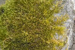 Moss on tree bark stock photo