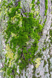 Moss Tree Bark Royalty Free Stock Images