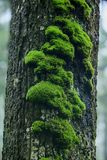 Moss is on a tree in the bark with moisture. In nature stock images