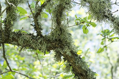 Moss on a tree Stock Image