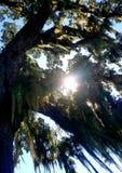 Moss Tree royalty free stock photos