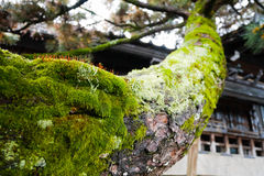 Moss on tree branch Stock Image