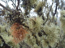 Moss on a tree branch in bosque fray jorge Stock Photo