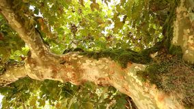 Moss on the tree close up stock footage
