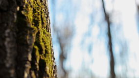 Moss on the tree. Clous-up stock video