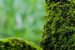 Moss on a tree Royalty Free Stock Photography