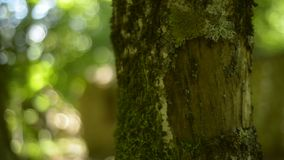 Moss on a Tree in forest Stock Images