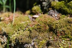 Moss on a tree. Green moss. A moss on a tree root Royalty Free Stock Photography