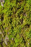 Moss on tree Stock Photos