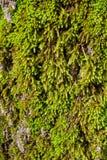 Moss on tree Stock Photos
