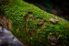Moss in a tree Royalty Free Stock Photo