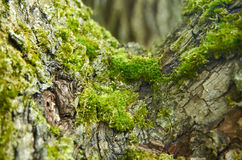 Moss on tree, nature macrophoto, tree bark Stock Photo