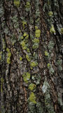 Moss on the tree after the rain. Moss stick on the tree after the rain Stock Photography