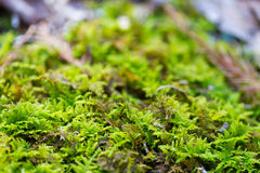 Moss on a tree Stock Photos