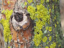 The moss on the tree. The moss on the tree, similar to Africa. Close-up Stock Photos