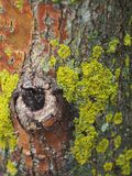 The moss on the tree. The moss on the tree, similar to Africa. Close-up Stock Images