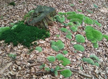 Moss and tree stump stock photos