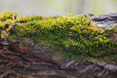 Moss on a tree Stock Photo