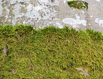 Moss on the tree Stock Image