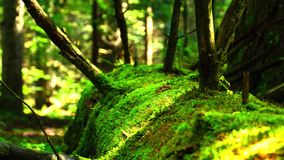 Moss on a tree stock video footage
