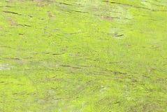 Moss on tree trunk Stock Image