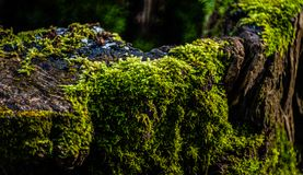 Moss on a Tree Trunk Stock Photos