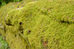 Moss on tree trunk Stock Photos