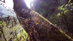 Moss on a tree trunk. On mountains background stock video footage