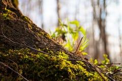 Moss on tree trunk vegetation. Plant royalty free stock photos