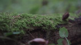 Moss on a tree and wood stock footage