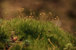 Moss Trees Fotografía de archivo