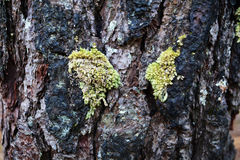 Moss on trees Royalty Free Stock Photography