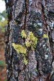 Moss on trees Stock Photo