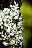 Moss on trees Royalty Free Stock Images