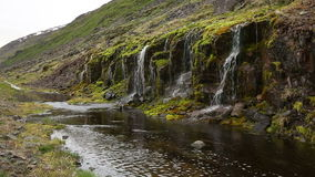 Moss and trickling water stock video