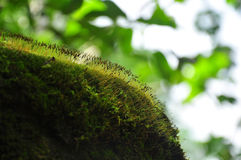 Moss in tropical rain forest Stock Photos