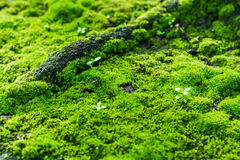 Moss. In tropical rain forest Stock Images