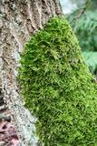 Moss on trunk stock photo