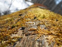 Moss on the trunk of fallen tree. Moss on the trunk of big fallen tree in sunny clear spring day in the forest stock photography